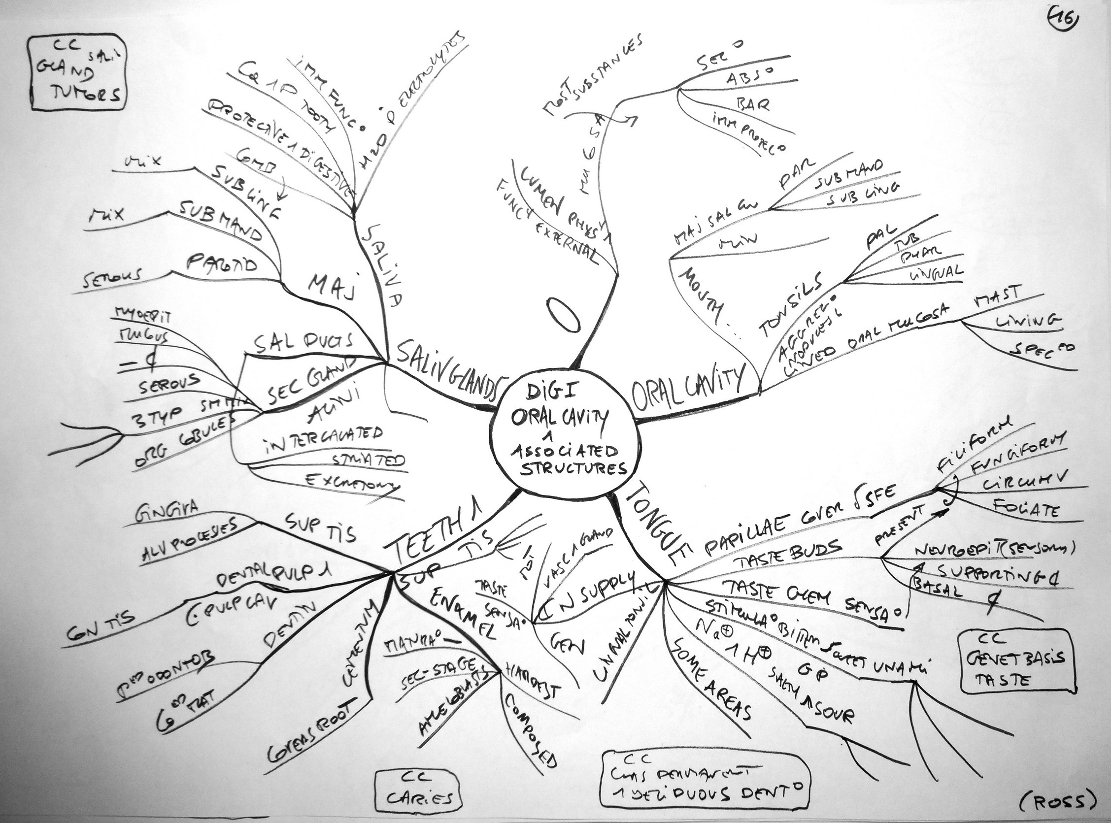 Body Systems Concept Map Concept Map Digestive System